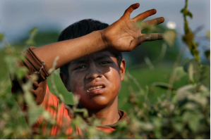 A boy pauses while picking tomatillos near Teacapan, Sinaloa. Data on child labor are scarce. Many farmers and distributors will not talk about it.